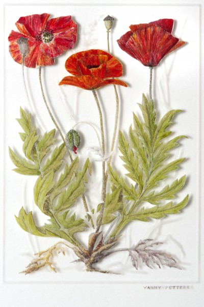 Papaver rhoeas~ Common Poppy Verre Églomisé /painting on glass  42cm x 39cm