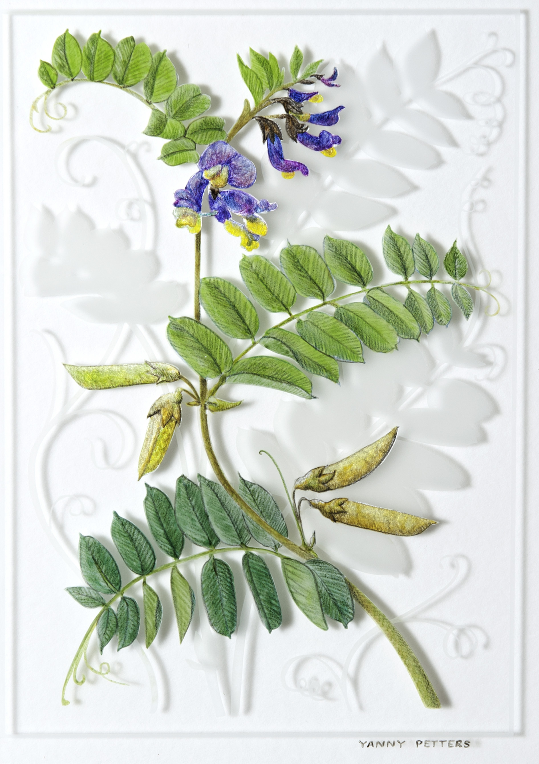 Vicia sepium ~ Bush Vetch painting & gilding on glass  Verre Églomisé   42cm x 39cm