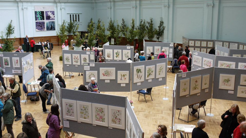 RHS Botanical Art Exhibition (photo Julie Whelan)