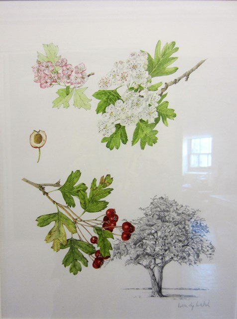 A Painting of Hawthorn by Wendy Walsh