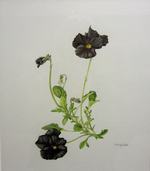 A painting of Viola 'Molly Sanderson' by Wendy Walsh