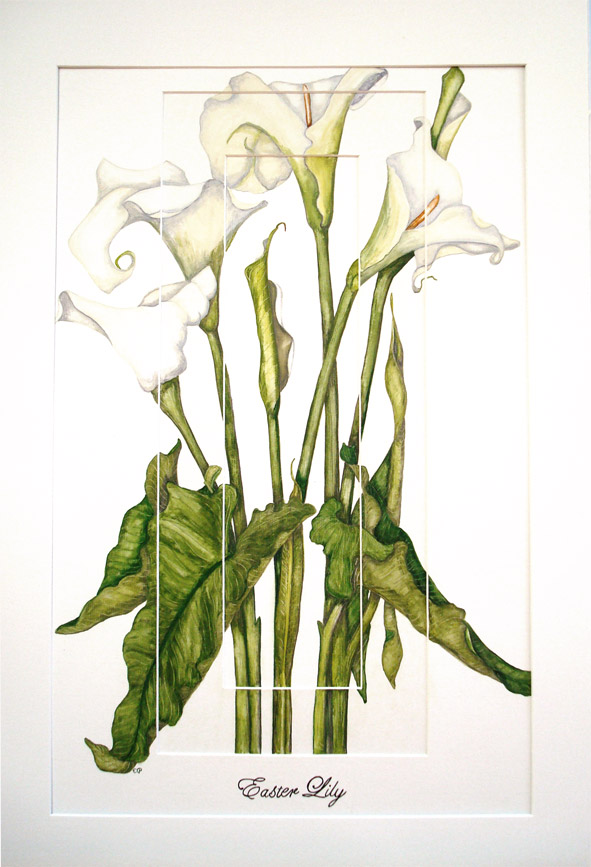 Easter Lily by Liz Prendergast