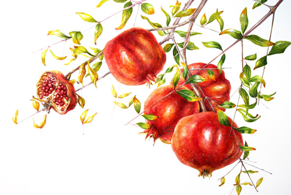 Pomegranate by Mary Dillon