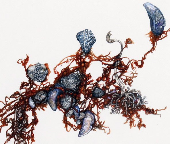 Tangled Seaweed (Bladder-Wrack) with mussels by Betty Christie