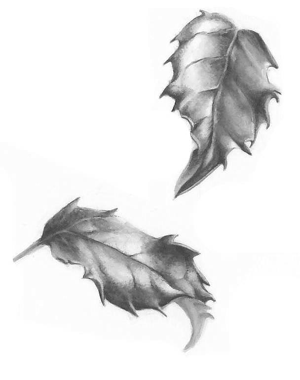 Holly leaf studies in greyscale - Lorraine Adams