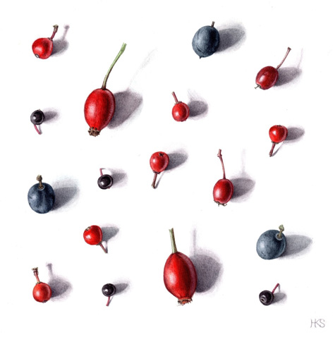 Autumn fruits by Holly Somerville