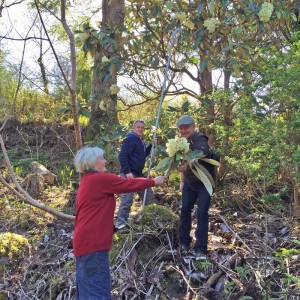 Plant Collecting in Glenveagh