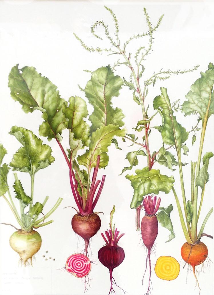 Bridget Gillespie's 'Root Vegetables - Life Cycle'