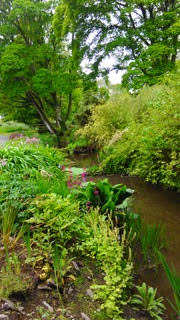 stream and woodland in Burtown