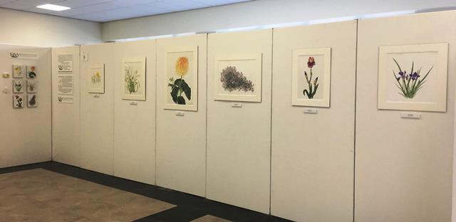 six paintings of irish heritage plants