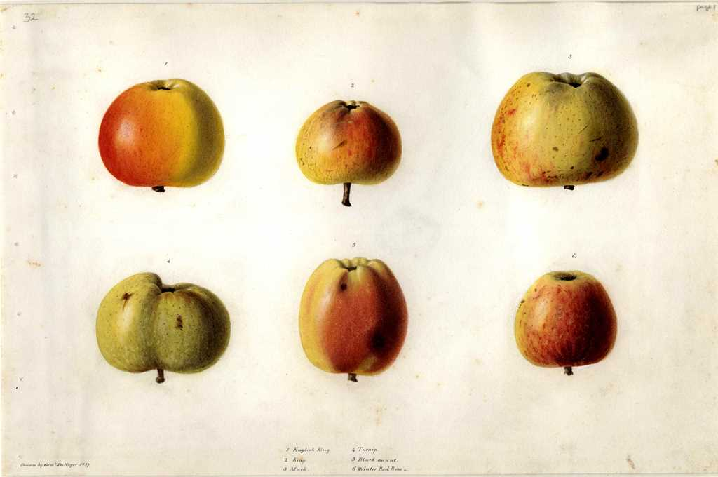 Apples painted by Georges Du Noyer in 1837.
