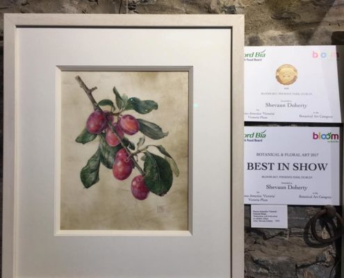 Painting of Prunus domestica 'Victoria' by Shevaun Doherty