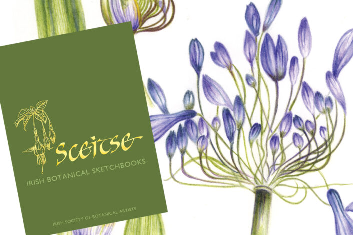 image of book cover and sketch of agapanthus