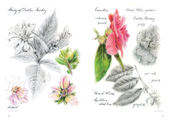 Image of two sketchbook pages by Noeleen Frain